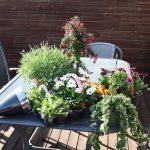 Vårens første tur til hagesenteret