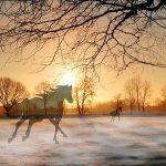 Hesten på Utvær